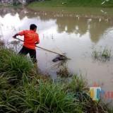 Ditemukan Mayat di Sungai Ngrowo, Diduga Maling Speaker Musala