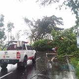 Ilustrasi pohon tumbang akibat diterjang angin kencang, Kabupaten Malang (Foto : Dokumen MalangTIMES)