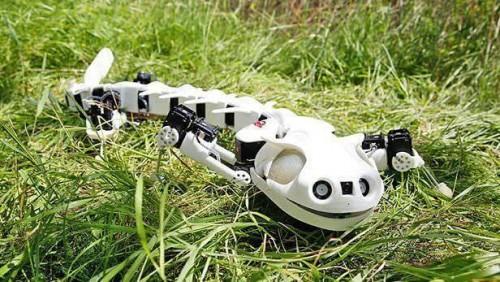 10-Robot-Mutakhir-yang-Terinspirasi-dari-Hewan-Apa-Saja550443f977e84d92d.jpg