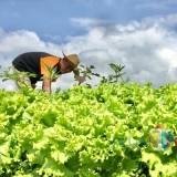 Garap Irigasi Pertanian, Pemkot Batu Kucurkan Dana Rp 5,25 Miliar