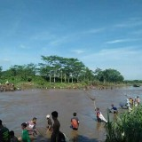 Musim Pladu / Foto : Istimewa / Tulungagung TIMES