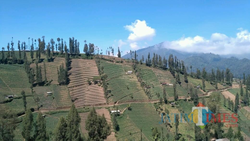 Suasana kawasan pertanian di sekitar Gunung Bromo. (Foto: Nurlayla Ratri/MalangTIMES)