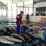 Pelelangan ikan di Sumawe, Kabupaten Malang. Dimana Dinas Perikanan sedang mempersiapkan aplikasi berbasis teknologi dalam pelelangan ikan (dok MalangTIMES)