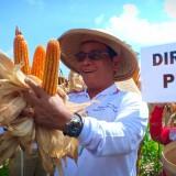 Dirjen Peternakan dan Kesehatan Hewan Kementan RI pimpin panen raya jagung di Desa Tulungrejo Wates.(Ist)