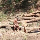 Pohon yang ditebang di bantaran sungai.