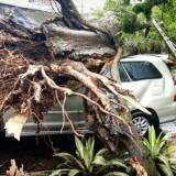 Tahun Pertama Diterapkan, Klaim Asuransi  Pohon Termanfaatkan untuk 26 Korban