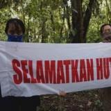 200 Hektar Hutan Lindung Apusan Rusak, Pembalakan Liar Pemicunya