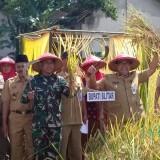 Bupati Blitar memimpin langsung panen raya padi di Desa Duren Kecamatan  Talun