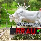 Datang ke Dusun Brau  di Kota Batu, Awas Banyak Sapi Cantik Menghadang
