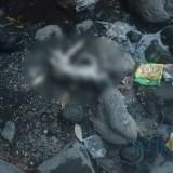 Sosok bayi laki-laki ditemukan sudah tak benyawa di Sungai Sumber Asem Bades Pasirian (Foto : Moch. R. Abdul Fatah / Jatim TIMES)