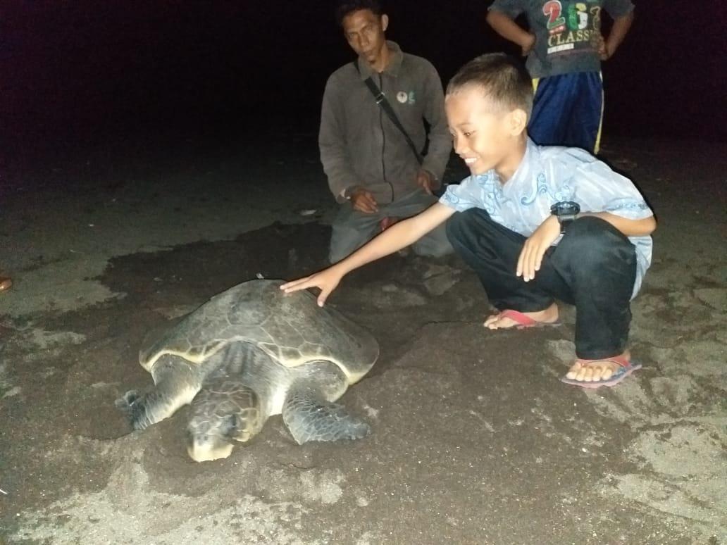 Seorang pengunjung berfoto dengan penyu usai hewan lindung itu bertelur