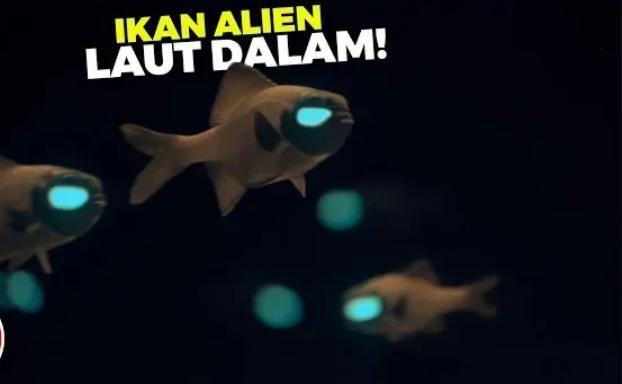 ikan yang bisa menyala didalam laut (daftarpopuler)