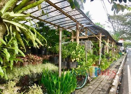 Fasilitasi Wisatawan, Jalan Bukit Berbunga Pasar Bunga Sidomulyo Dilebarkan