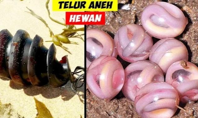 Telur hewan yang berbentuk aneh (Daftar5)