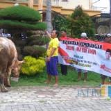 Relawan Milenial Jokowi potong sapi.