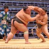Sumo pekerjaan berbahaya dengan gaji mencapai Rp 12 miliar di Jepang. (Foto: istimewa)