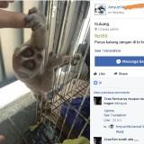 Jual Beli Online Satwa Dilindungi Tetap Marak Meski Facebook Terapkan Larangan, Salah Satunya di Malang