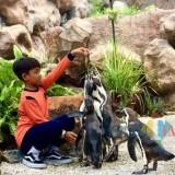 Salah satu siswa memberikan ikan kepada penguin di Eco Green Park, Kamis (25/4/2019). (Foto: Irsya Richa/MalangTIMES)