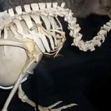 burung kiwi yang punya telur hampir sebesar badannya (Theshinypeanut)