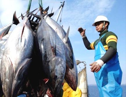 Hasil tangkap ikan tuna di Malang Selatan terus mengalami penurunan dikarenakan cuaca (Ist)