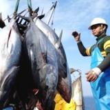 Hasil Tangkap Ikan Laut Turun, Persediaan Tuna Merosot Tajam di Kabupaten Malang