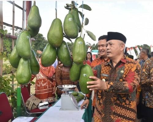 Wabup Malang Sanusi saat melihat buah alpukat di acara Edi Wisata Padi, Singosari. (Humas)