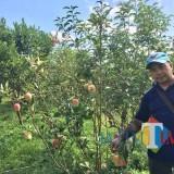 Lahan apel di Desa Tulungrejo, Kecamatan Bumiaji. (Foto: Irsya Richa/MalangTIMES)