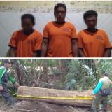 Pencurian Pohon Milik Perhutani Marak Terjadi, Tiga Tersangka Akhirnya Berhasil Diringkus Polisi