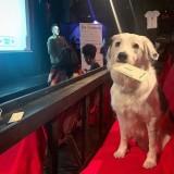 Salah satu anjing yang dibawa oleh pengunjung di K9 Cinemas. (Foto: istimewa)