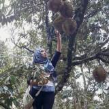 Durian asal Kabupaten Malang menjadi buah favorit masyarakat Asian (Ist)
