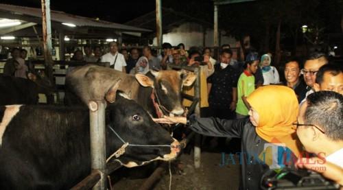 Gubernur Khofifah ketika sidak di rumah potong hewan (RPH).