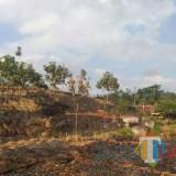 Lahan yang dipersengketakan di Tegalrejo dan dimenangkan pihak PTPN XII Pancursari (dok MalangTIMES)