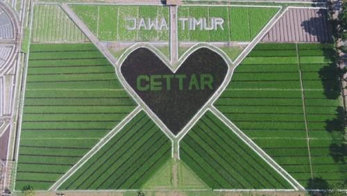 Lahan Sawah seluas 2,1 hektar di Kecamatan Papar Kabupaten Kediri nampak dari atas (ist)