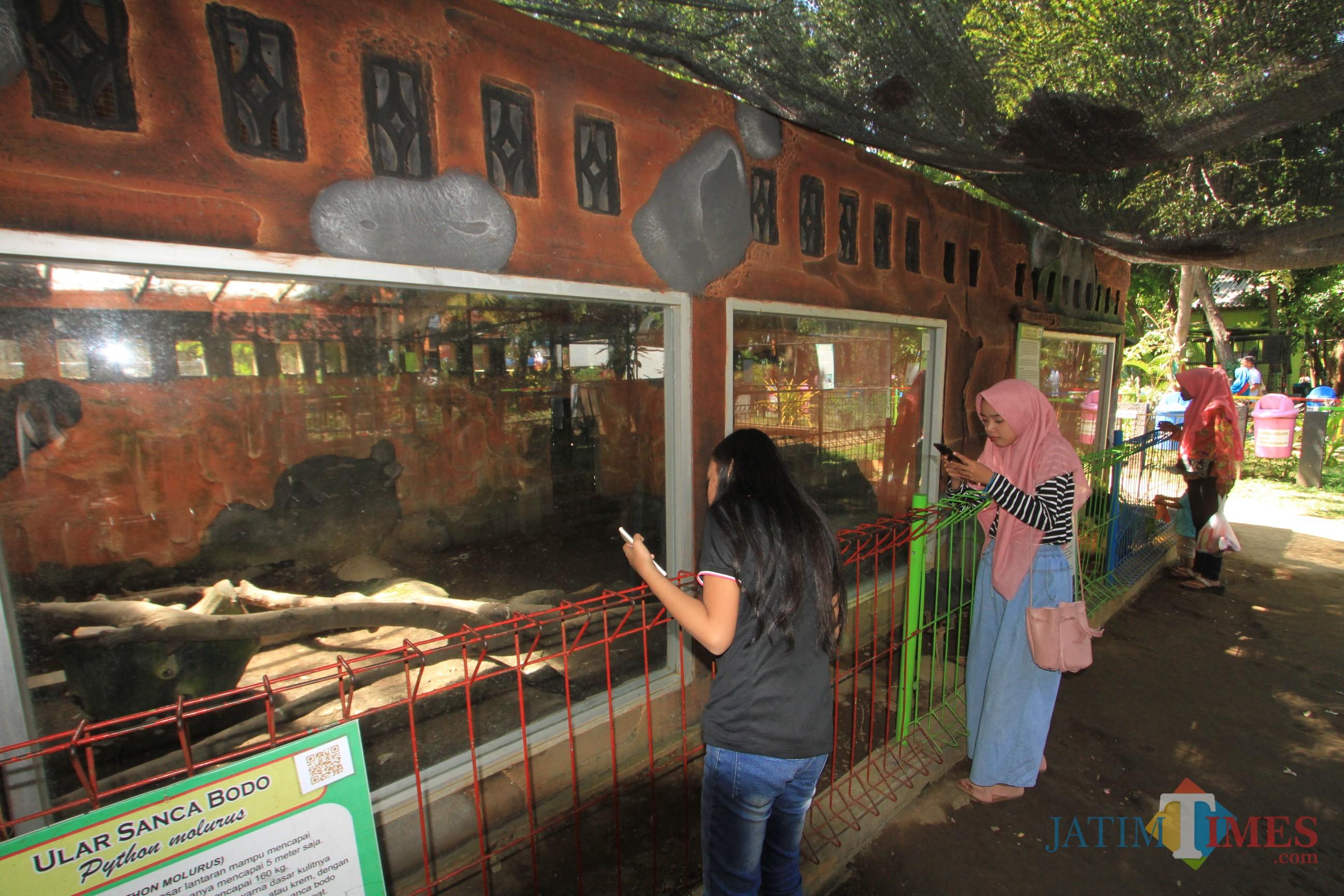 Pengunjung anak-anak sedang melihat binatang koleksi Kebun Binatang Mini (TWSL) Kota Probolinggo. (Agus Salam.Jatim TIMES)