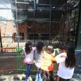 Pengunjung anak-anak sedang melihat binatang kandang macan di Kebun Binatang Mini (TWSL) Kota Probolinggo (Agus Salam/Jatim TIMES)