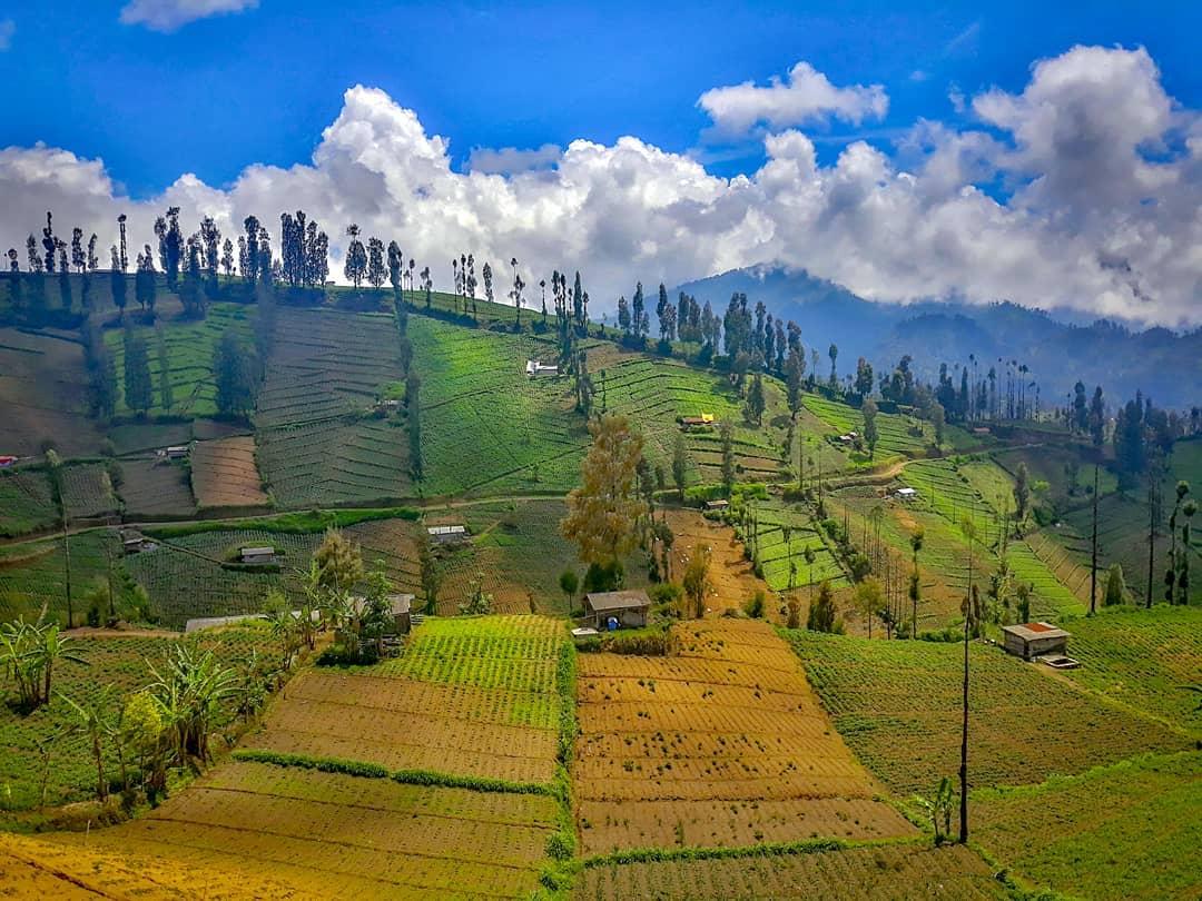 Secuil surga di atas awan, desa Ngadas, Poncokusumo yang jadi nominasi API 2019 kategori dataran tinggi terpopuler (Ist)