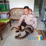 Aiptu Harry K, saat menunjukkan ular Piton peliharaannya (Anggara Sudiongko/MalangTIMES)