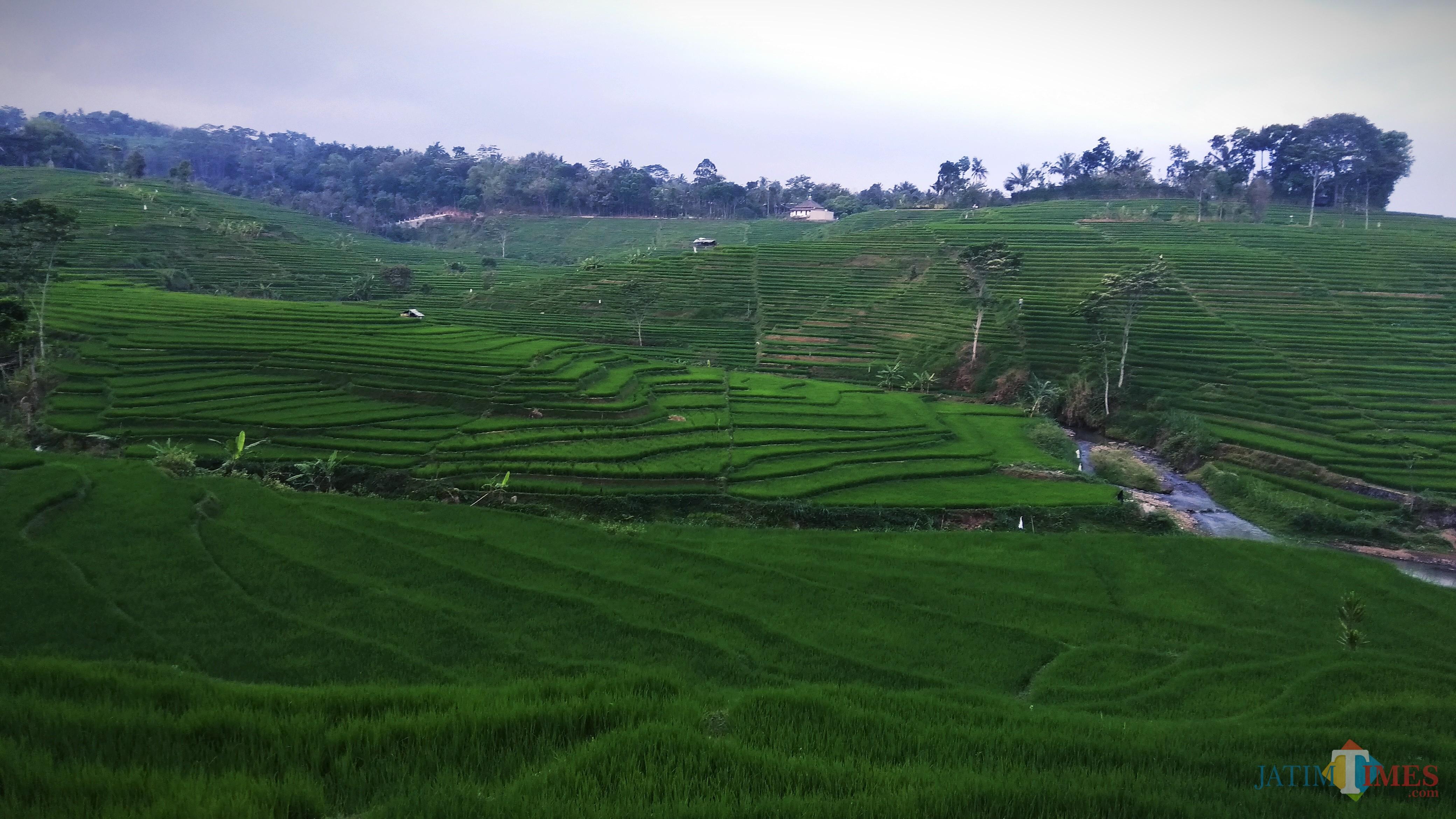 Ilustrasi daerah persawahan. (Foto: Nurlayla Ratri/MalangTIMES)