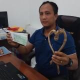 Kanit Reskrim menunjukkan pusaka bambu abal-abal dan kwitansi yang disita dari tersangka