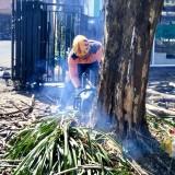 75 Pohon Mati Ditebangi Antisipasi Pohon Tumbang saat Kemarau