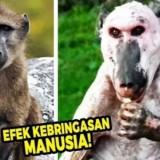 Perubahan hewan karena pencemaran lingkungan (daftarpopuler)