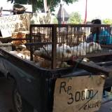 Budi Setyawan menjajakan ayam-ayamnya di depan kantor desa Bangsri.(Foto : Team BlitarTIMES)