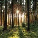 Ratusan Pohon Hilang, Perhutani Blitar Rugi Ratusan Juta
