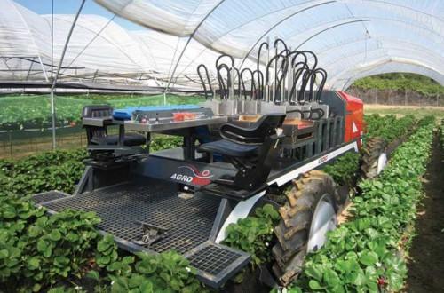 Agrobot, mesin pemanen strawberry. (istimewa)