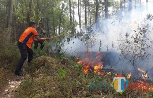 Salah satu kejadian hutan kebakaran di hutan Kota Batu.