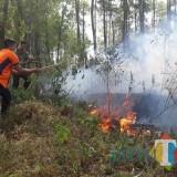 Kemarau Rawan Kebakaran, Perhutani Ingatkan Para Pendaki Gunung