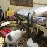 Kucing bernama Messi saat berada di samping jenazah tuannya.