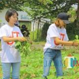 Para mahasiswa saat memanen sayur organik di Kampung Ekologi, Kelurahan Temas, Kecamatan Batu beberapa saat lalu.