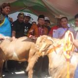 Bupati  Blitar  Rijanto saat meninjau kontes Kambing di Blitar Cocoa Festival.(Foto : Aunur Rofiq/BlitarTIMES)