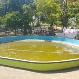Salah satu kolam di Taman Maramis Kota Probolinggo yang kotor dan airnya menghijau (Agus Salam/Jatim TIMES)